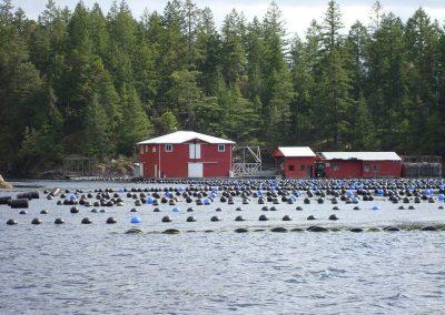 Sinku Site Sykes Island Jervis Inlet